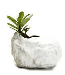 Buy Modern Shell Shaped Ceramic planter pot pot online