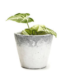 Buy Conical Shape Stone Finish Stone Planter Pot pot online