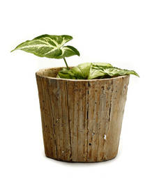 Buy Conical Tree Bark Look Rough Finish Stone Pot pot online