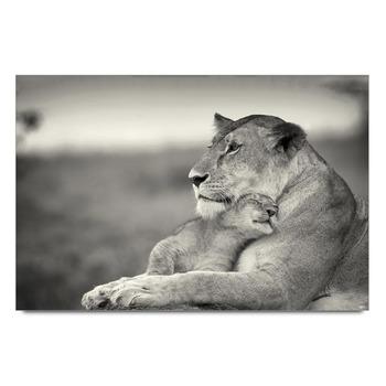 Lion Cuddle Poster