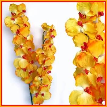 Venda Orchid (Yellow Shaded)